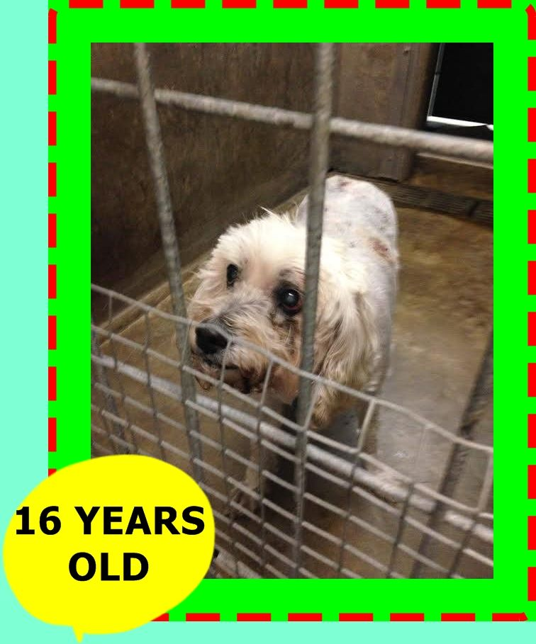 NICO ID# A1527346 was dumped at the E. Valley Shelter by his family on Christmas Eve - the owner told the shelter to euthanize him but the shelter said no. NICO is old with health issues but is not ready to die!! NICO was crying and looking at the owner as he turned his back on NICO and walked out! After 16 yrs of companionship and friendship this is how they treat ... https://www.facebook.com/photo.php?fbid=10203452624460686&set=a.3864602897962.55383594.1365191228&type=1&theater