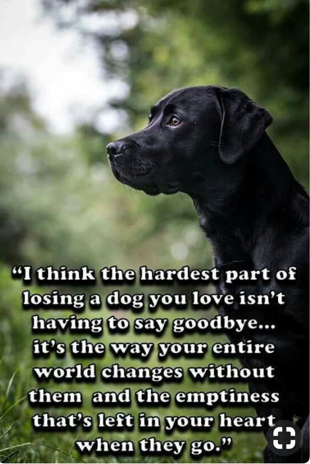 Omgosh Soooooooo True All Dogs Go To Heaven Dogs Pets Puppies