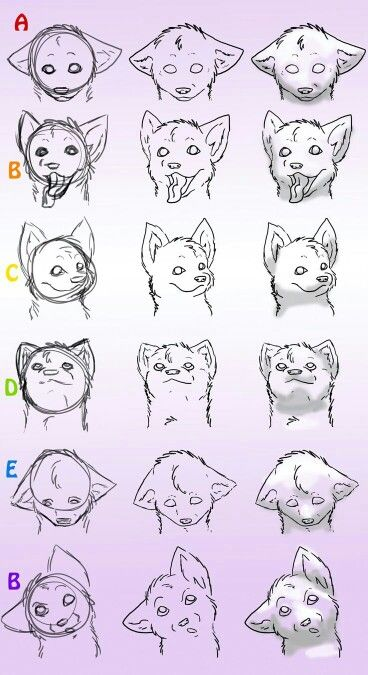 how to draw wolves heads