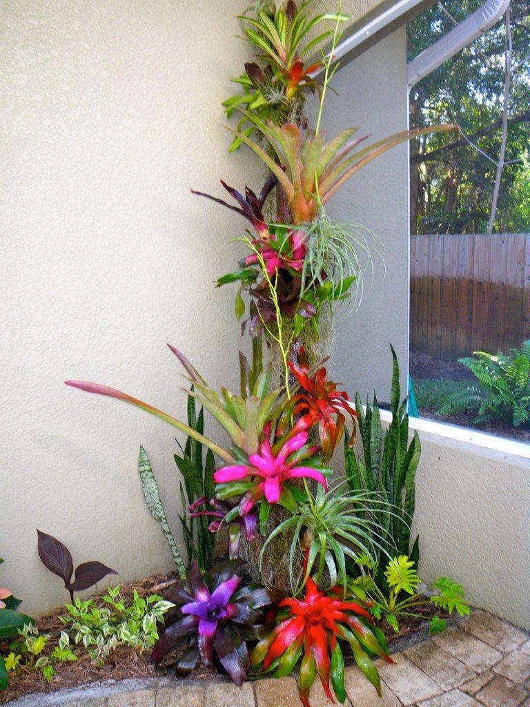 pool/lanai plantings | green | Pinterest | Lanai, Backyard ...