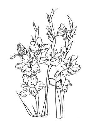 Ausmalbild Gladiolen flower coloring Malvorlagen