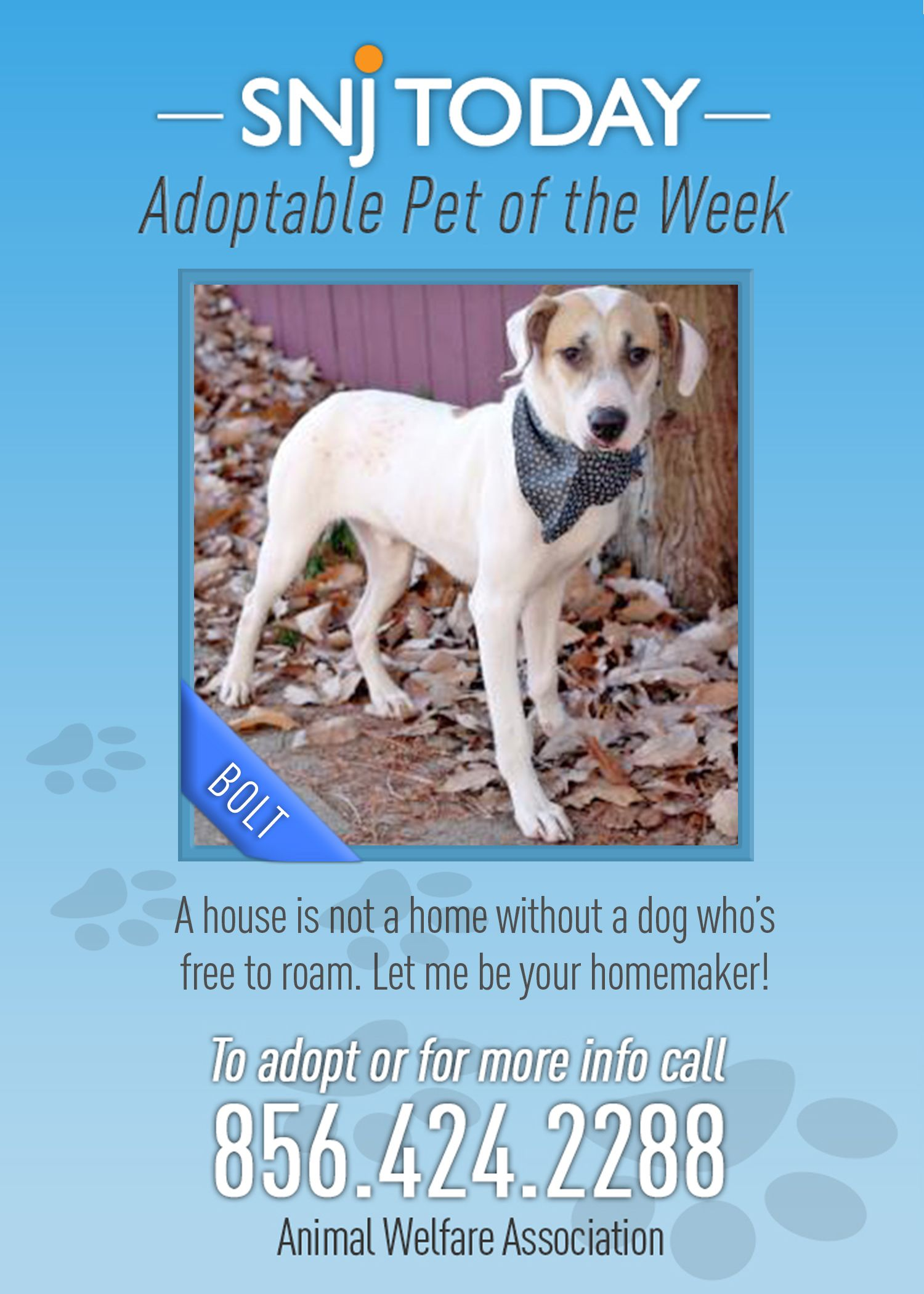 Bolt Is Snj S Adoptable Pet Of The Week He S A One Year Old Labrador Retriever Mix Who Loves To Be With Children This L No Kill Animal Shelter Animals Animal Welfare