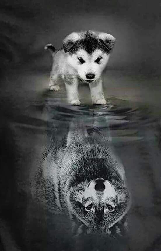 Riflesso Cane Lupo Cuccioli Di Lupo Animali Cuccioli Di Animale