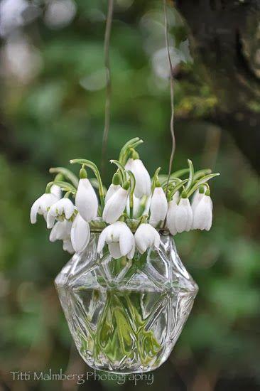 Pin Van Kristina Op Snowdrop Cottage Bolbloemen Planten Witte Bloemen