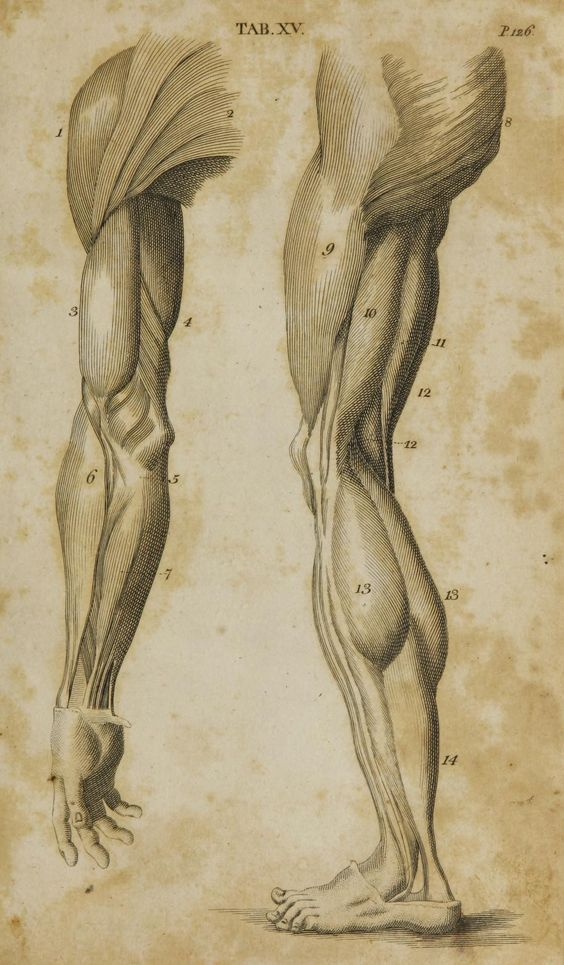 Anatomia: | Estudios | Pinterest | Anatomy, Character design and ...