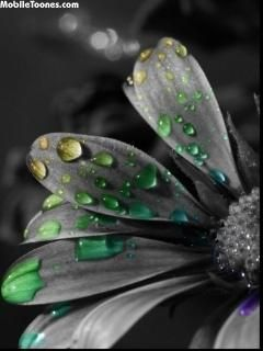 Gray Flower With Colorful Water Drops Mobile Wallpaper Color