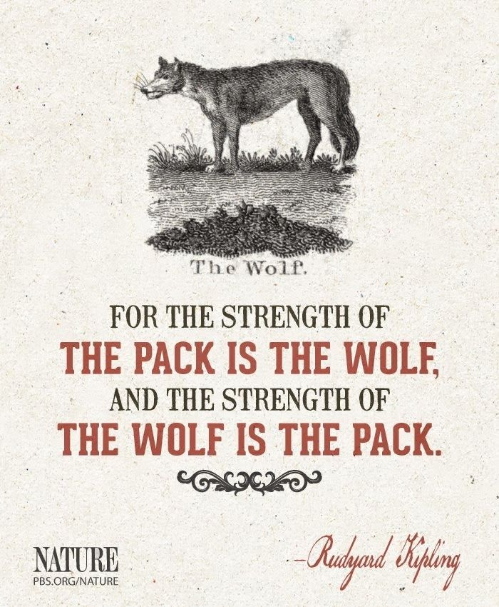 Wolf Quote.... Strength!!!