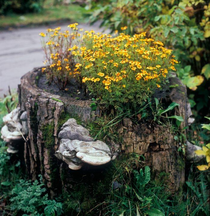 90 Deko Ideen zum Selbermachen für sommerliche Stimmung im Garten - kies garten gelb