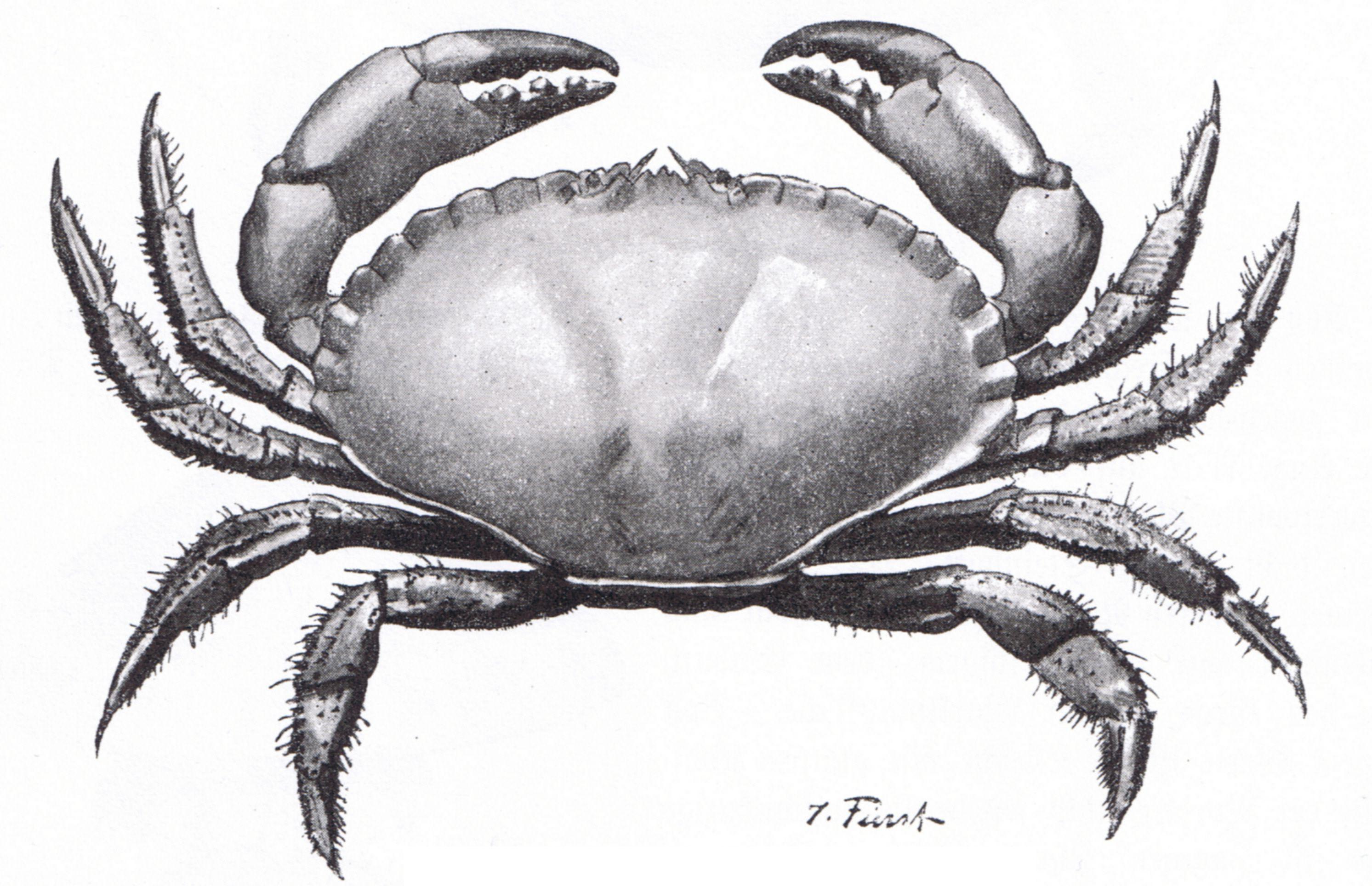 Pin by Андрей Атучин on crabs   Pinterest