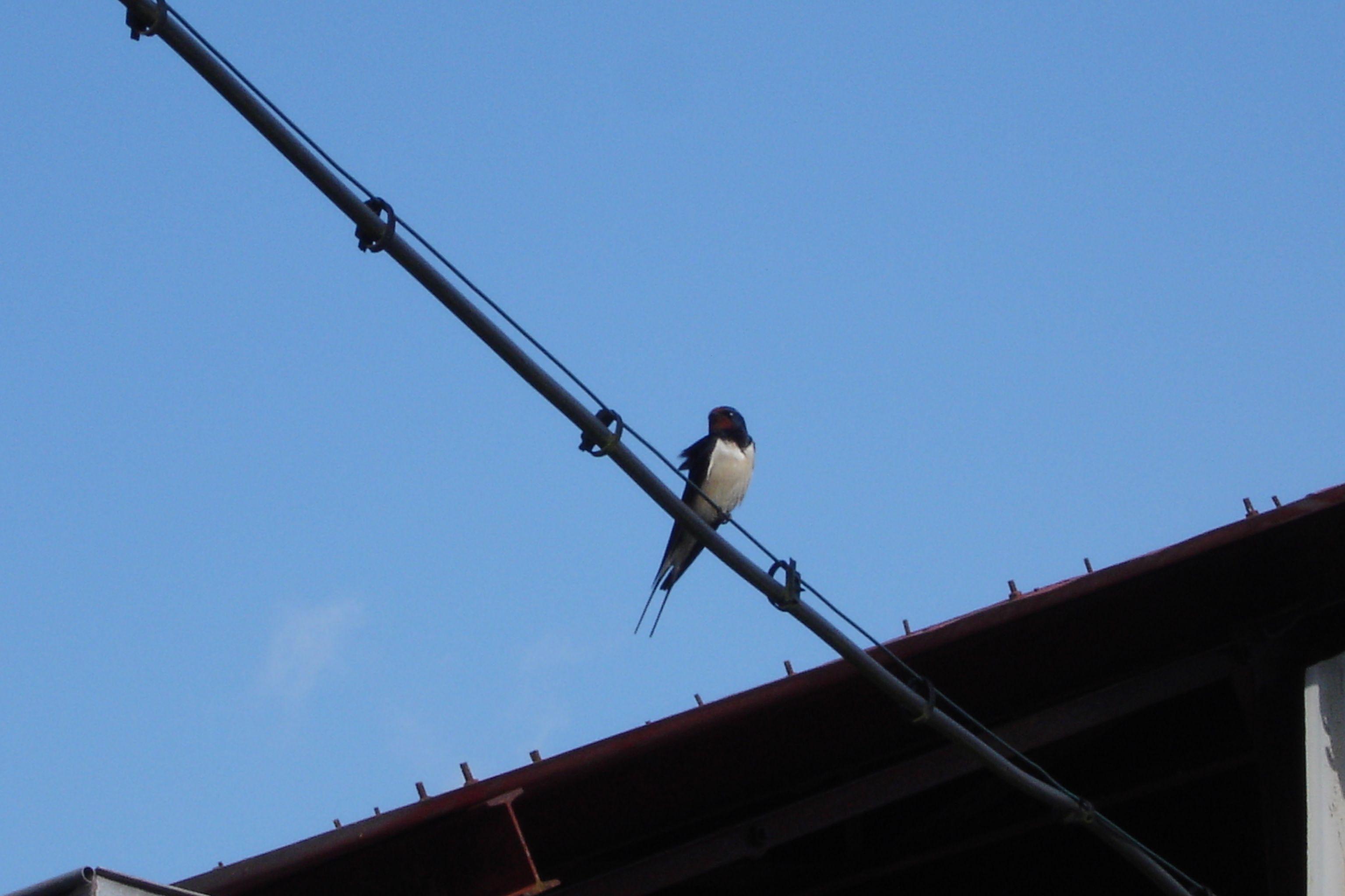Eén zwaluw maakt nog een zomer....