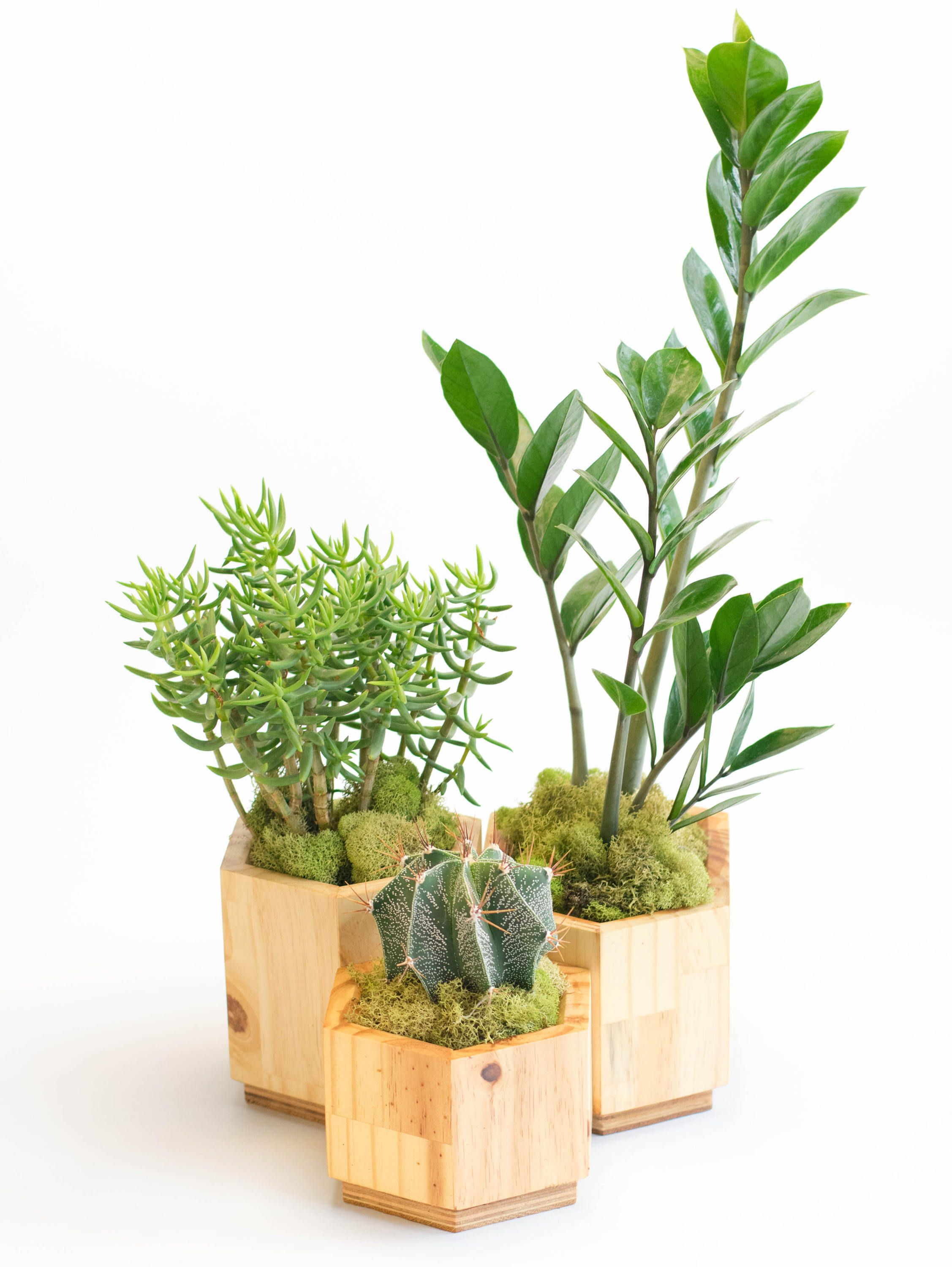 Hexagon Planter Set Geometric Planter Wood Planters Wooden Planter, Succulent Planter,