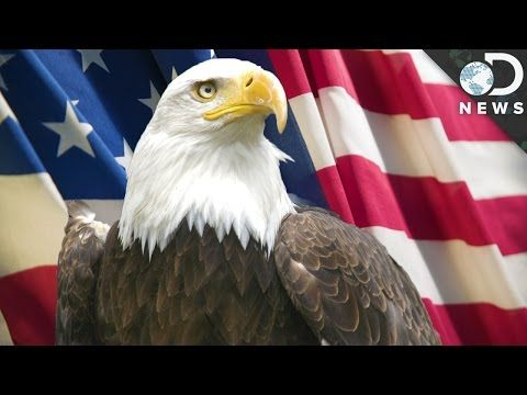9 Facts You Didnt Know About Bald Eagles Youtube America