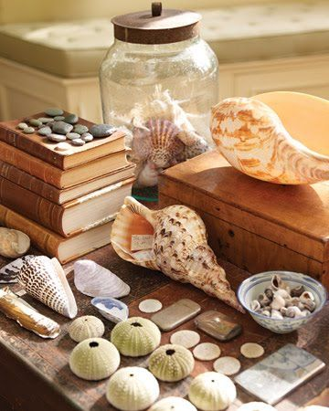 31 seashell collection display ideas encouraging inspirations rh pinterest com
