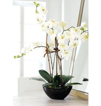 Home affaire Kunstblume »Orchidee« Jetzt bestellen unter: https://moebel.ladendirekt.de/dekoration/dekopflanzen/kunstpflanzen/?uid=670de678-1f8d-519c-bb41-e2f0a778ac5f&utm_source=pinterest&utm_medium=pin&utm_campaign=boards #kunststoffpflanzen #dekopflanzen #kunstpflanzen #dekoration