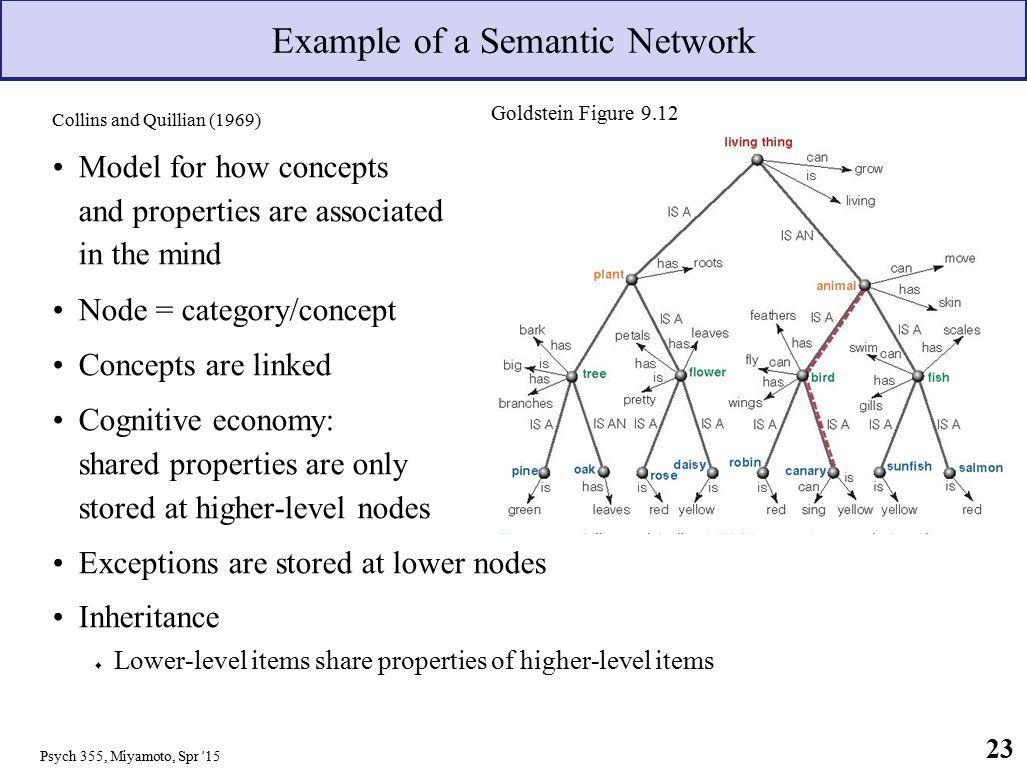 Nodes Psychology Google Search Cognitive Psychology