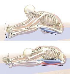 how to lengthen the hamstrings in janu sirsasana  yoga
