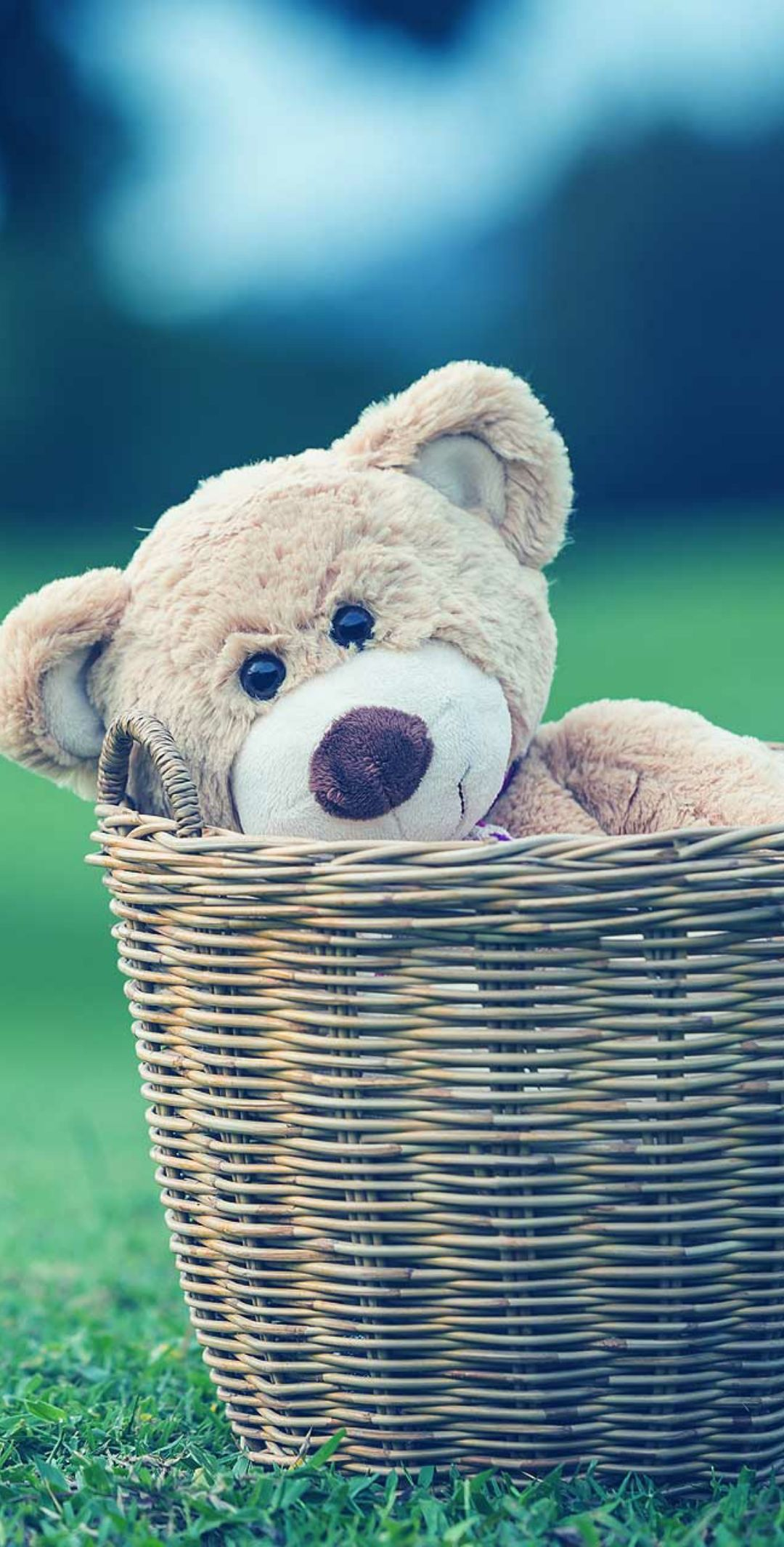 Apple Iphone Android Pixel Wallpaper Teddy Bear Wallpaper Teddy Bear Teddy