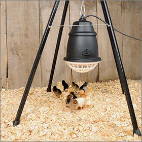 Prima Heat Lamp Poultry Products And Ideas Chicken Pen