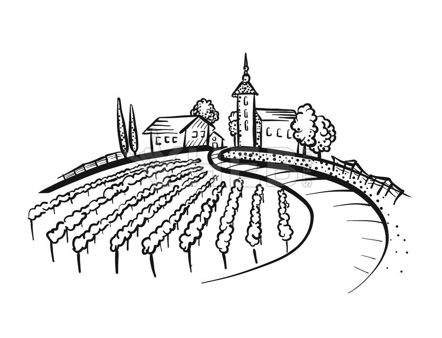 Vineyard Drawing With Path And Houses On Hill