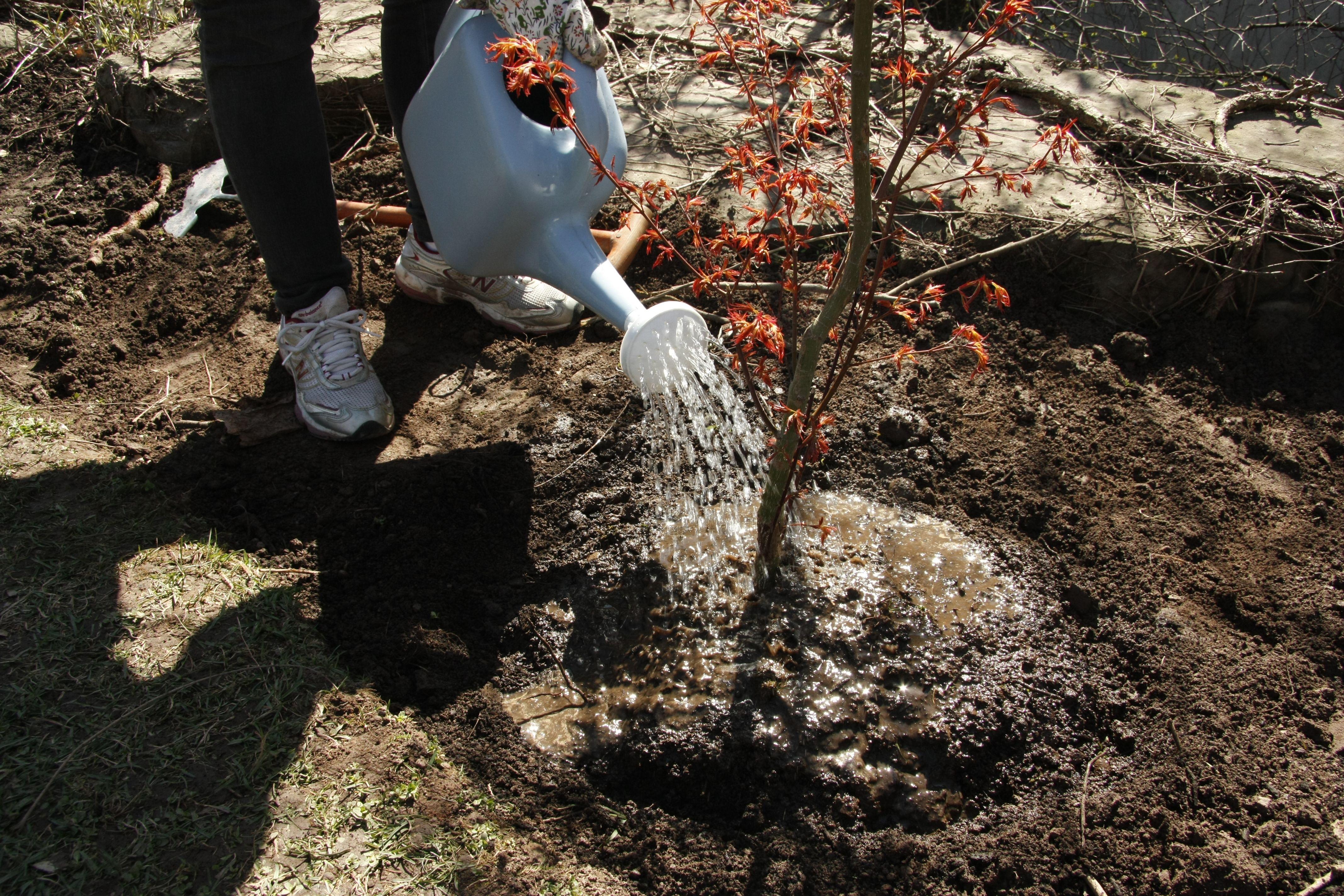 trees gotta drink too!   #BWtreeplant #earthday2013