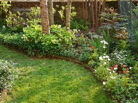 Aiuole all 39 ombra cerca con google jardin pinterest for Progettazione aiuole