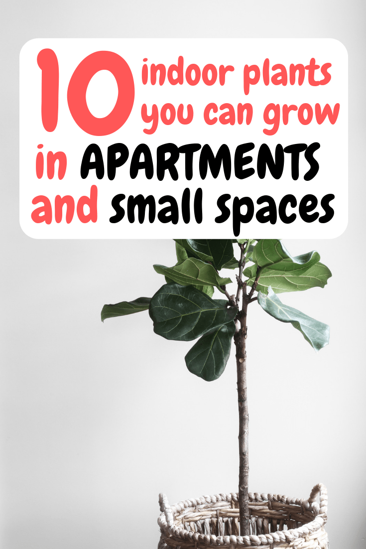 Best Plants To Grow In Apartments & Small Spaces is part of Growing plants indoors, Plants, Cool plants, Easy plants to grow, Household plants, Avocado plant - Today we are BACK at you with another post and we are going to be going over the best plants you should be growing in your apartment! We've all been there, right  Some of us are still there, …