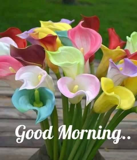 Colorful Good Morning Flowers Good Morning Flowers Good Morning Images Flowers Good Morning Flowers Pictures