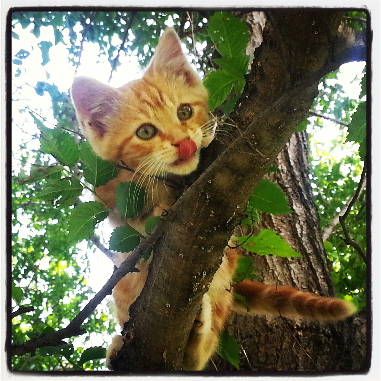 Radar Kitten Cuteness Vspets Internet Pet Competition Cutest Dog Contest Enter Your Pet At Www Vspets Com Dog Contest Orange Cats Cute Animals