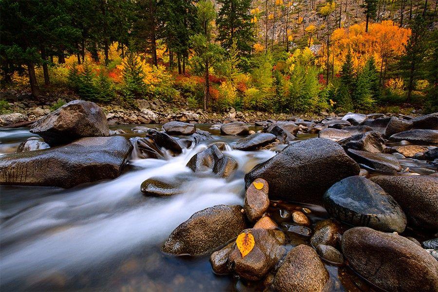 Autumn Rush by DanMihai