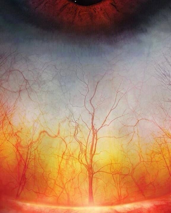 This is a close up of a human eye. It looks a little like a forest!
