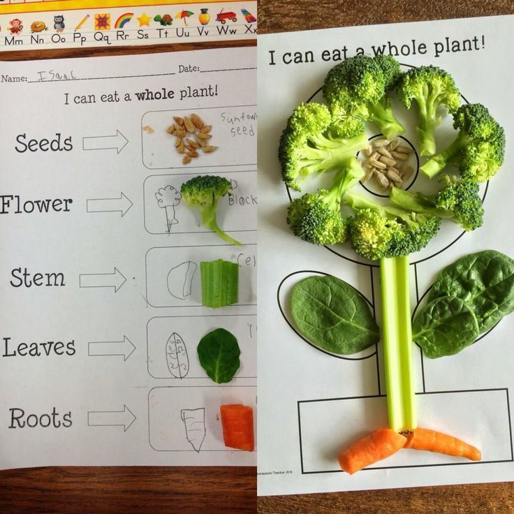 Plant activities for kindergarten, preschool, first grade