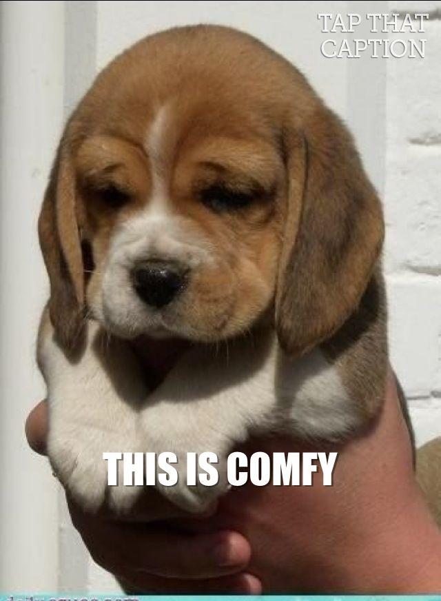 Wish This Was My Puppy Cute Baby Animals Cute Animals Beagle Puppy