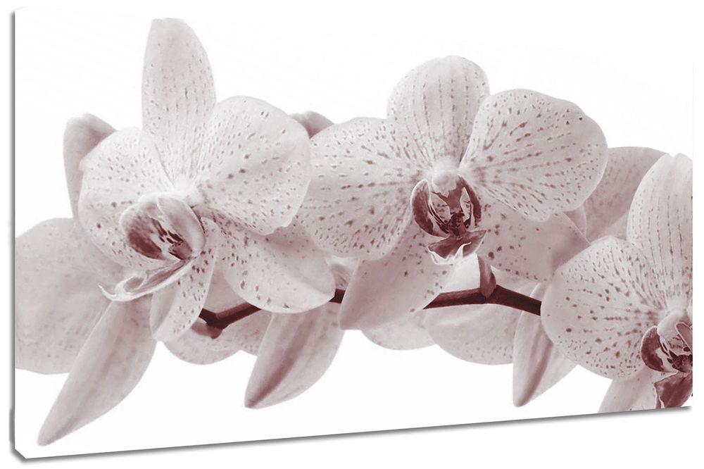 Quadro moderno fiori orchidea natura arredo casa arte stampa su tela
