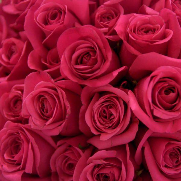 Картинки с белыми розами