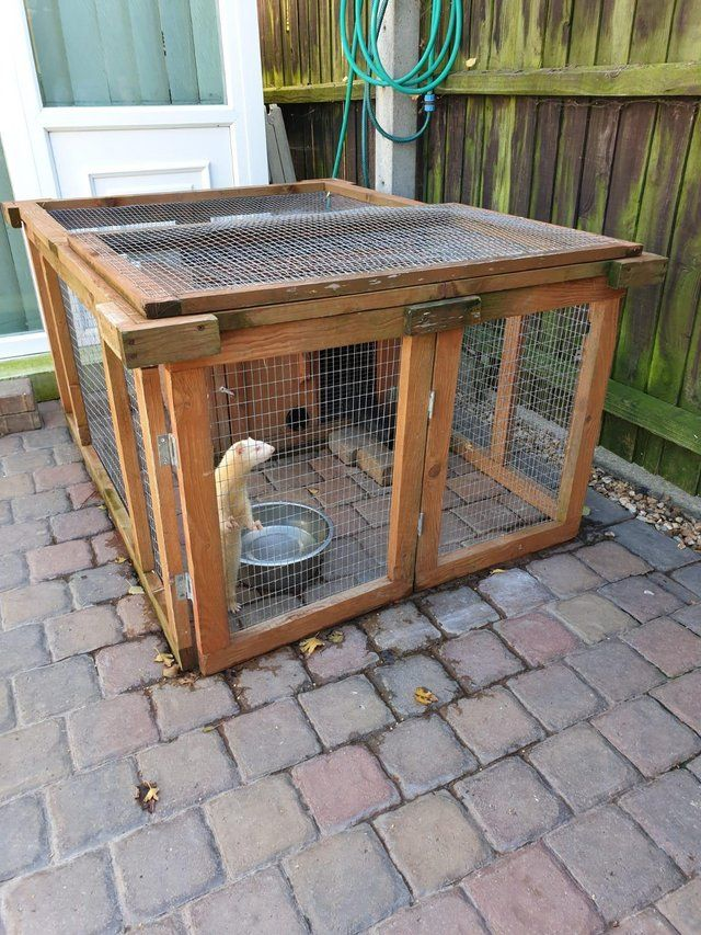 Ferrets And All Accessories Outdoor Tables Stills For Sale