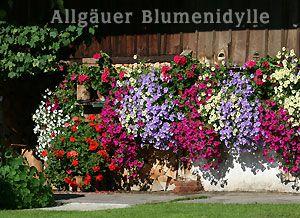 blumenk sten balkonk sten bepflanzen balkonpflanzen terrassenbepflanzung zimmerpflanzen. Black Bedroom Furniture Sets. Home Design Ideas