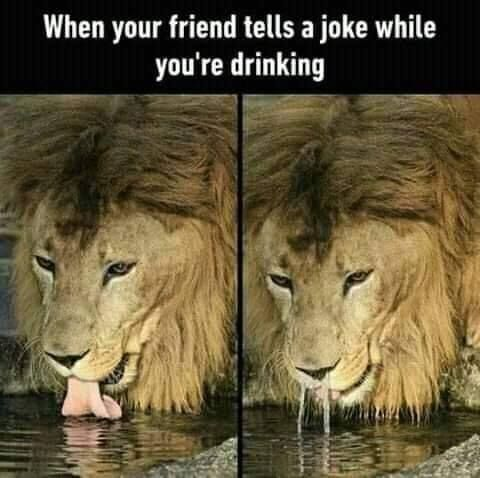 22 Jokes Of The Day For Friday 11 January 2019 Viraluck Funny Funnymemes Really Funny Memes Stupid Funny Memes Funny Animal Memes