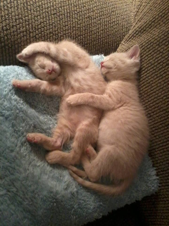 Jacqueline and Jillian always take their catnaps together. (Photo by Michelle R.)