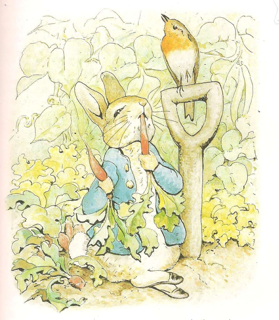 Beatrix Potter, English Robin | Brit - English Robin in 2018 ...
