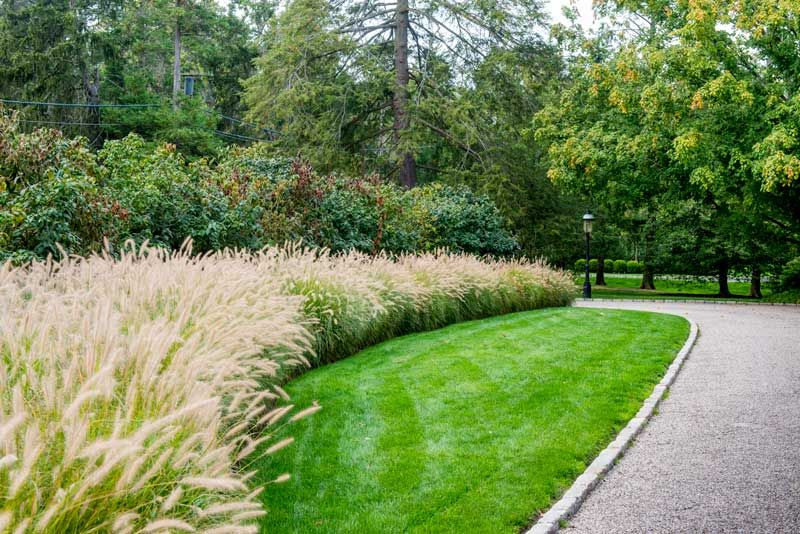 Visiting mara s garden grasses and gardens for Ornamental grass landscape ideas