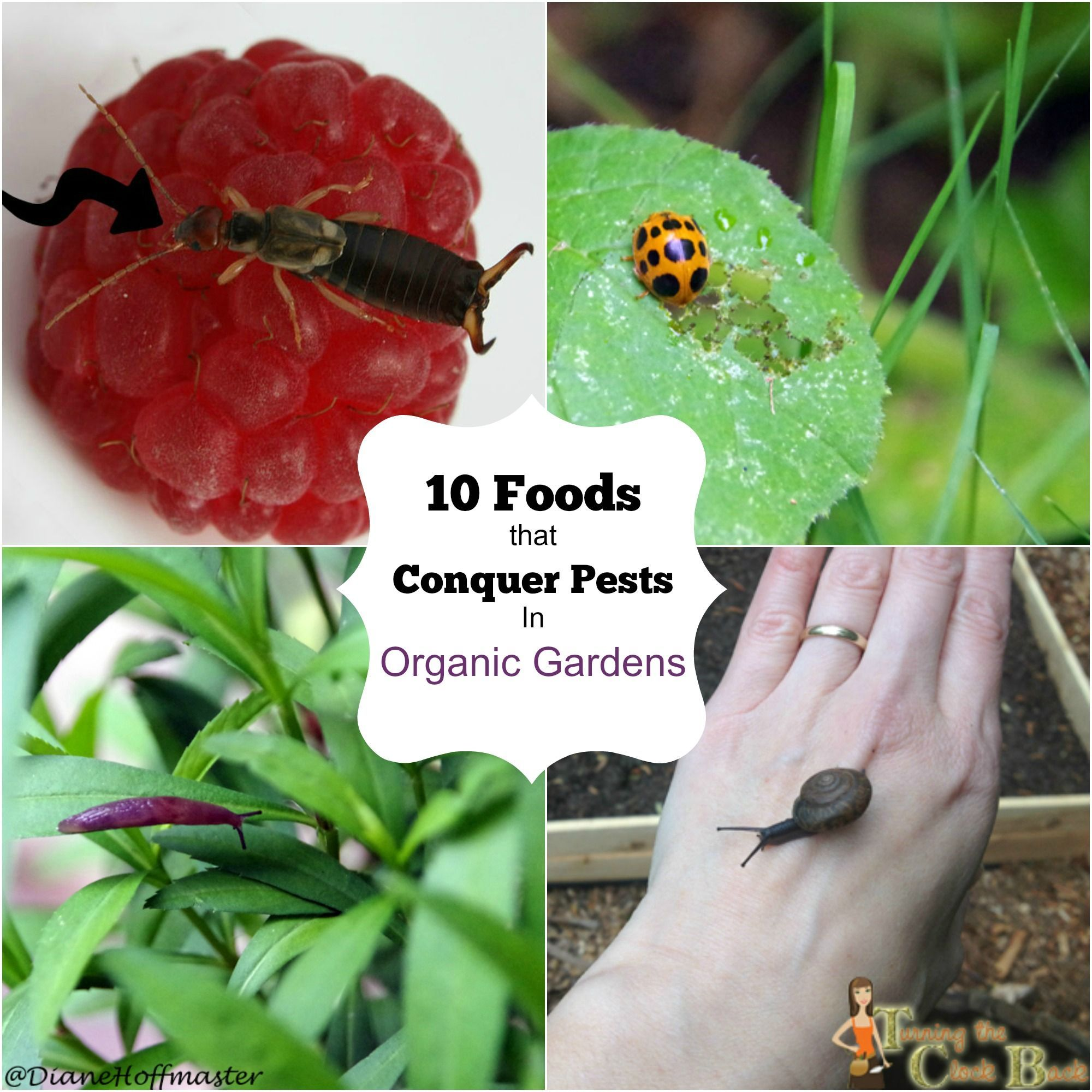 10 Foods That Conquer Garden Pests In The Organic Garden