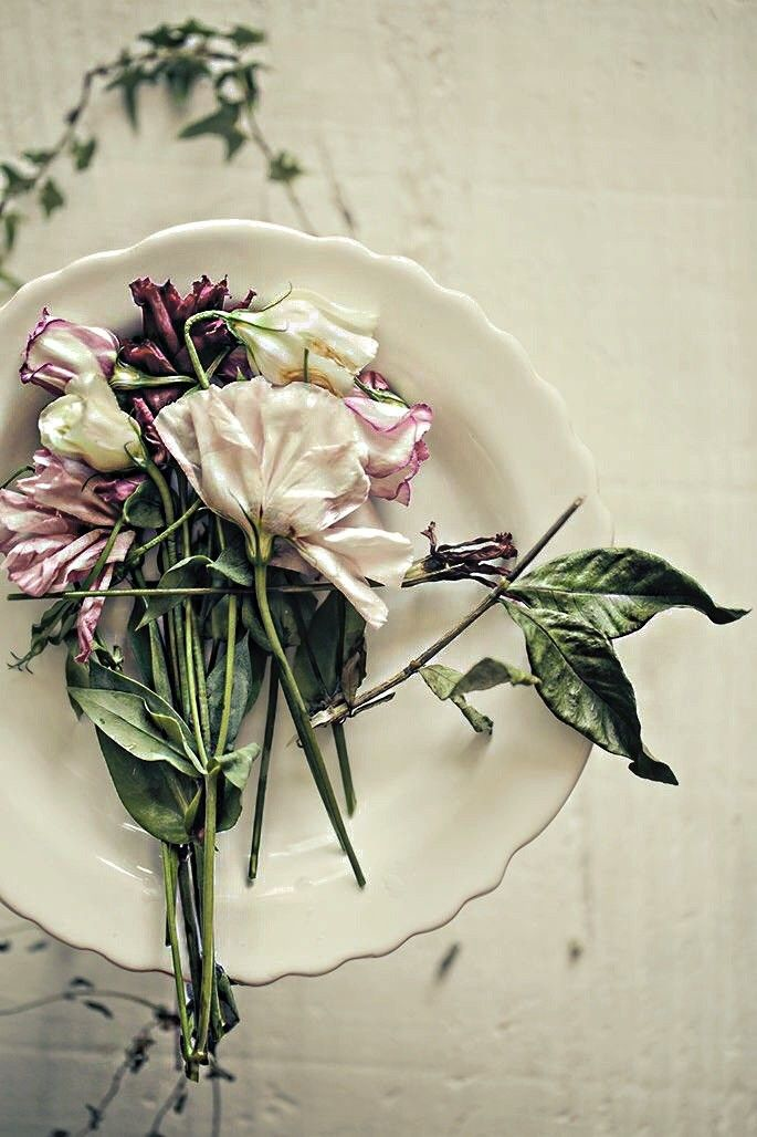 A Soft Elegance | ZsaZsa Bellagio - Like No Other