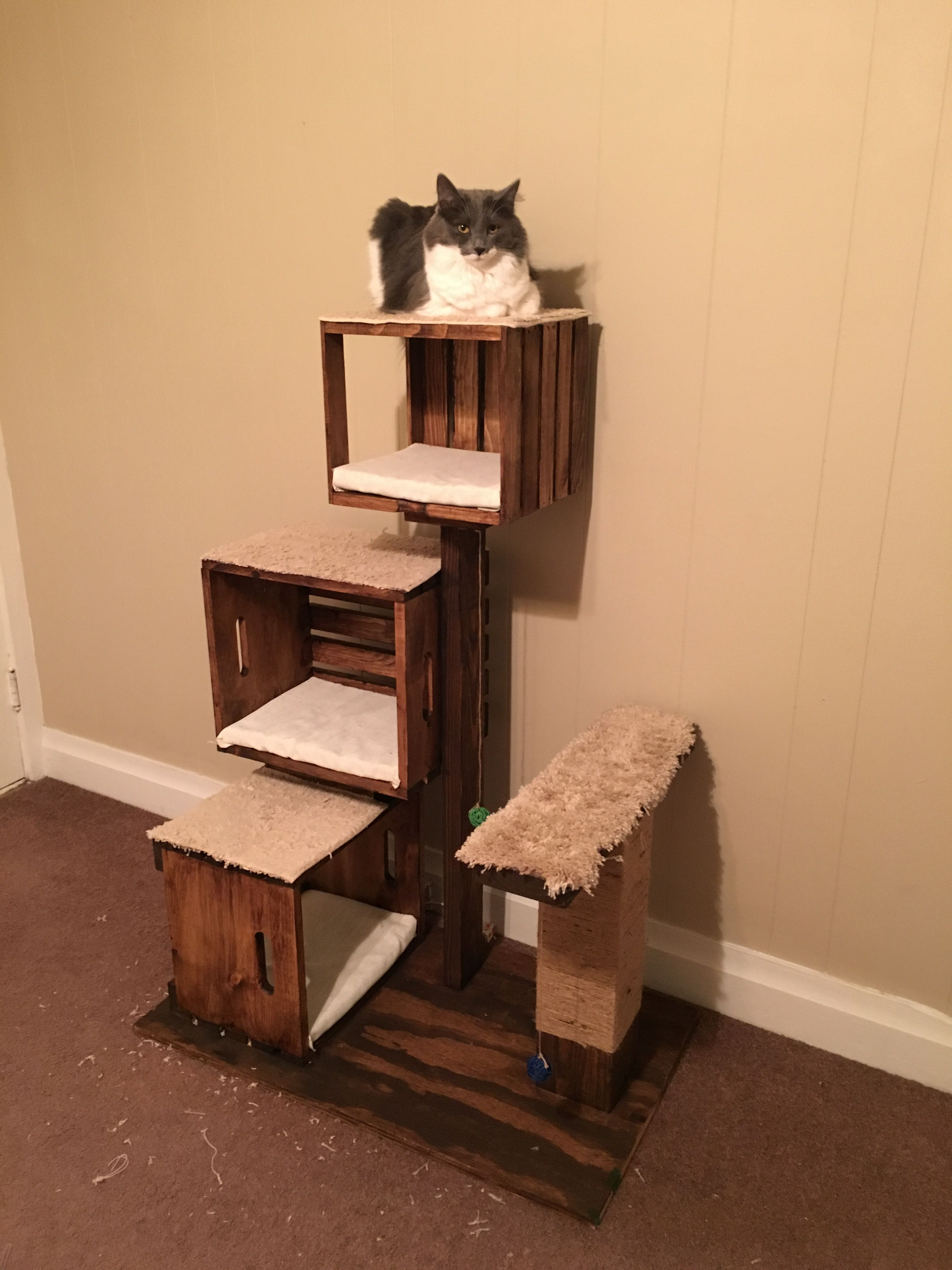 curious picture furniture room domestic and cat animals head cats pet fauna kitchen free kittens