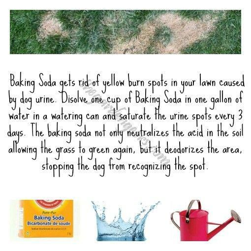 Via The Garden Geeks Baking Soda Eliminates Yellow Spots From Dog