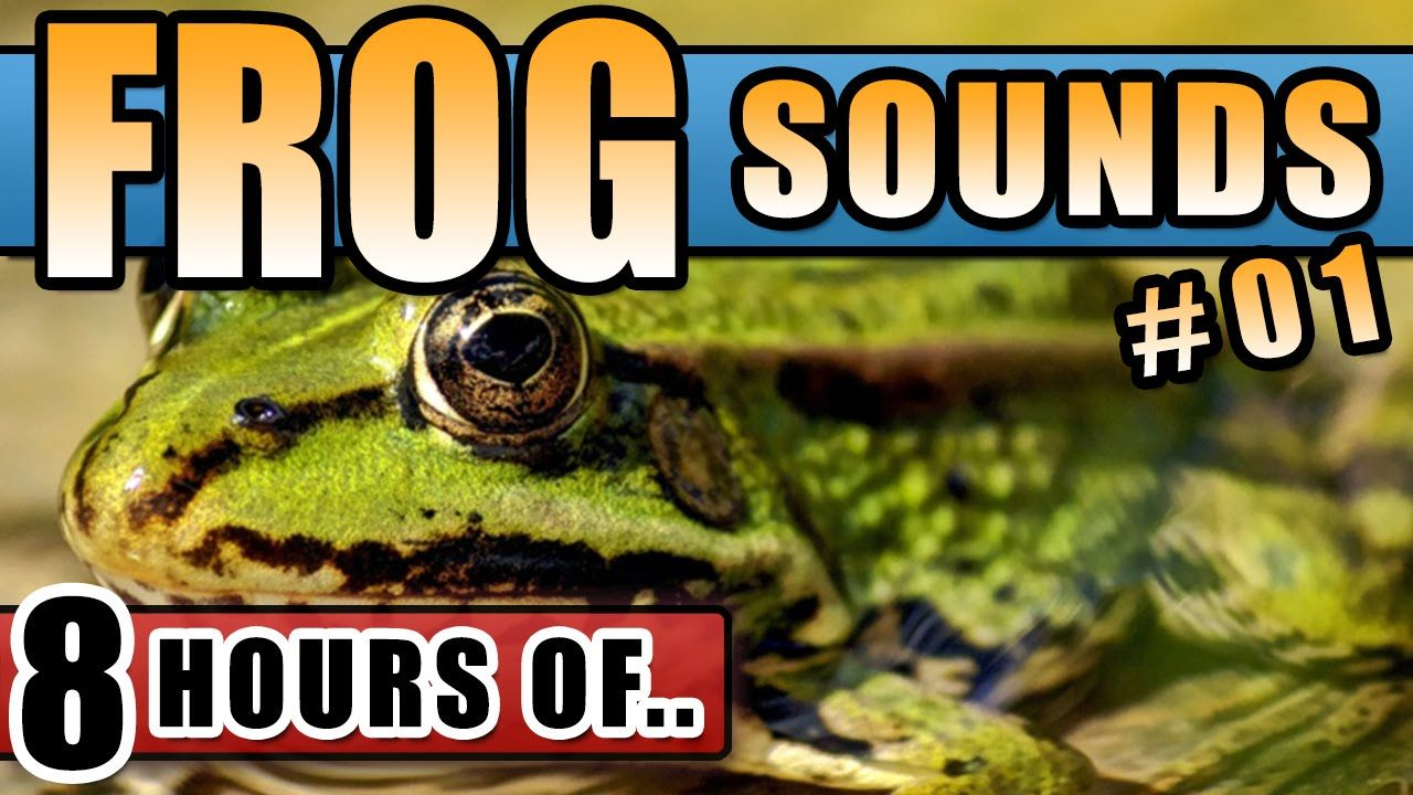 Frog Sounds Frog Noises Frogs Croaking At Night Bullfrog Sounds For C Childrens Music Youtube Frog