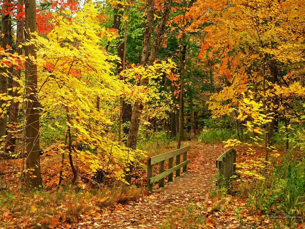 Autumn A Season Of New Beginnings Autumn Scenes Autumn Scenery Autumn Wallpaper Hd