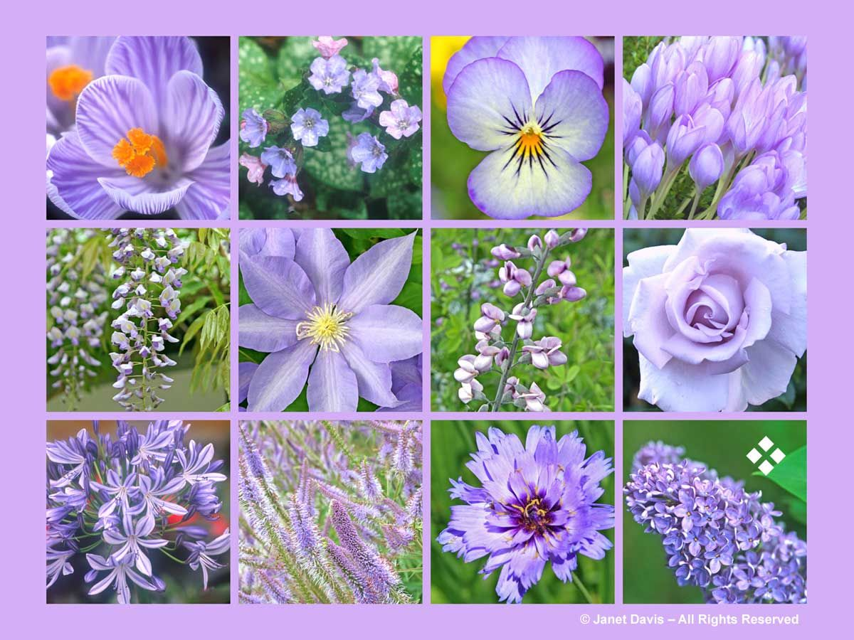 Lilac Purple Flowers Thepaintboxgarden Annual Flowers Flower Chart Purple Flowers