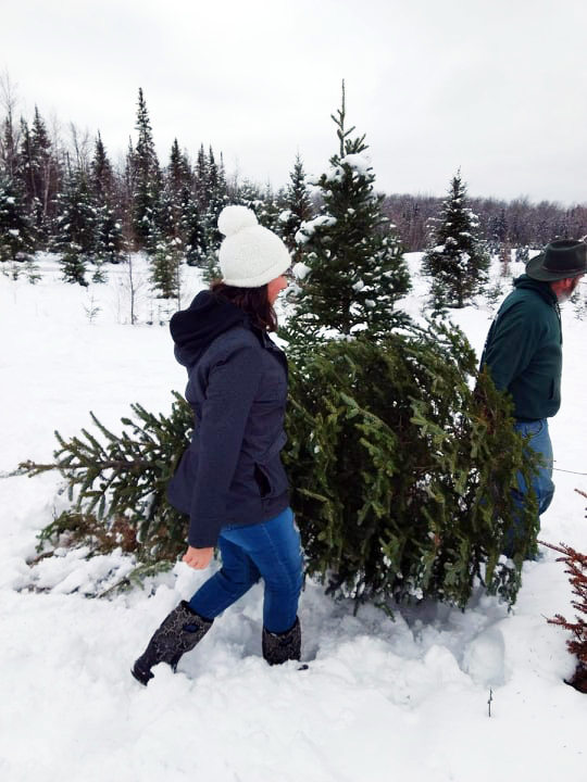 Sterling Ridge Resort lets you cut your own Christmas tree or have one ready and waiting in your private cabin when you arrive for your winter vacation! #wintervacation #christmasinvermont #christmasgoals