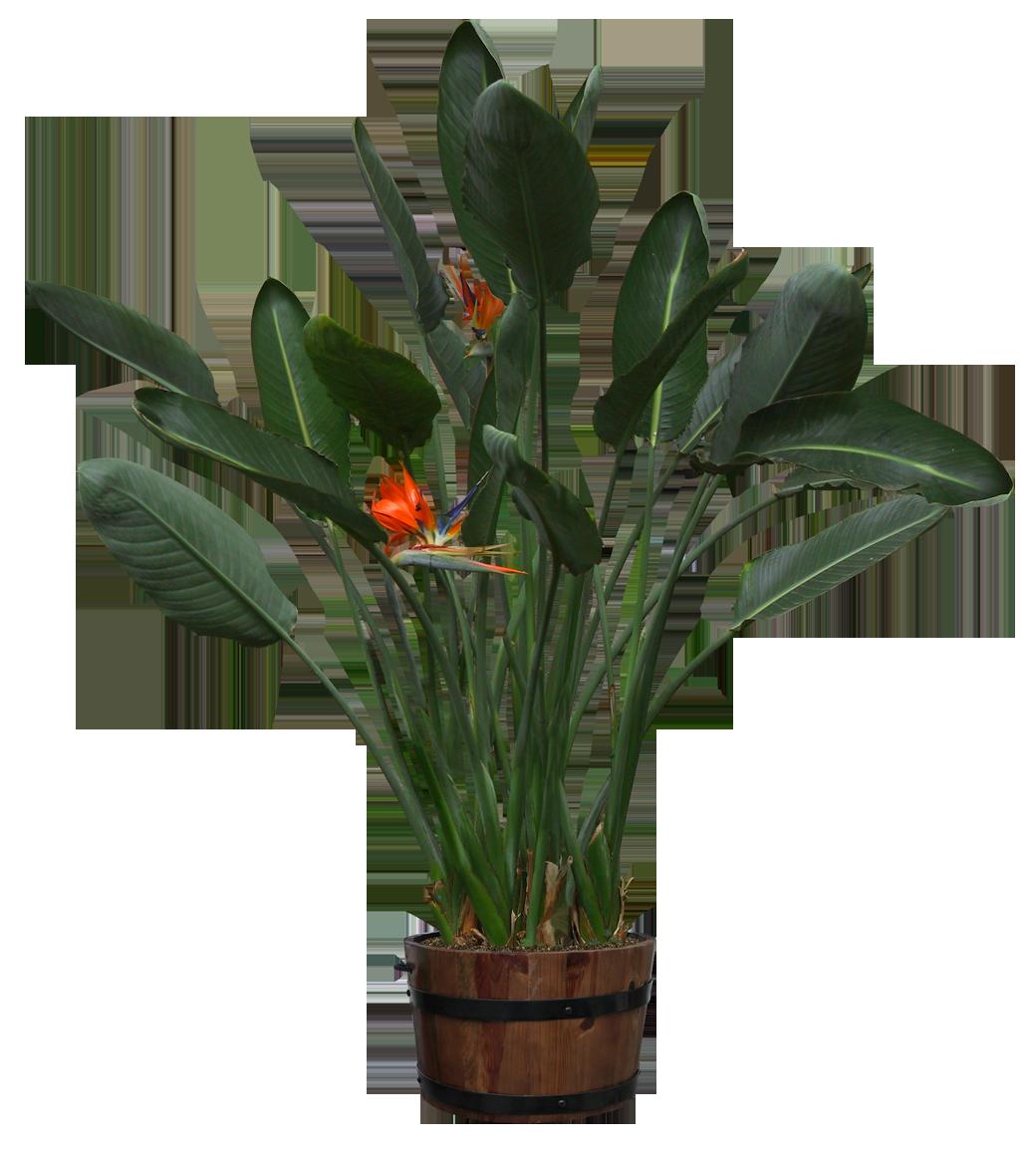 Psd Png Cutout Pot Bunga Bunga Menanam