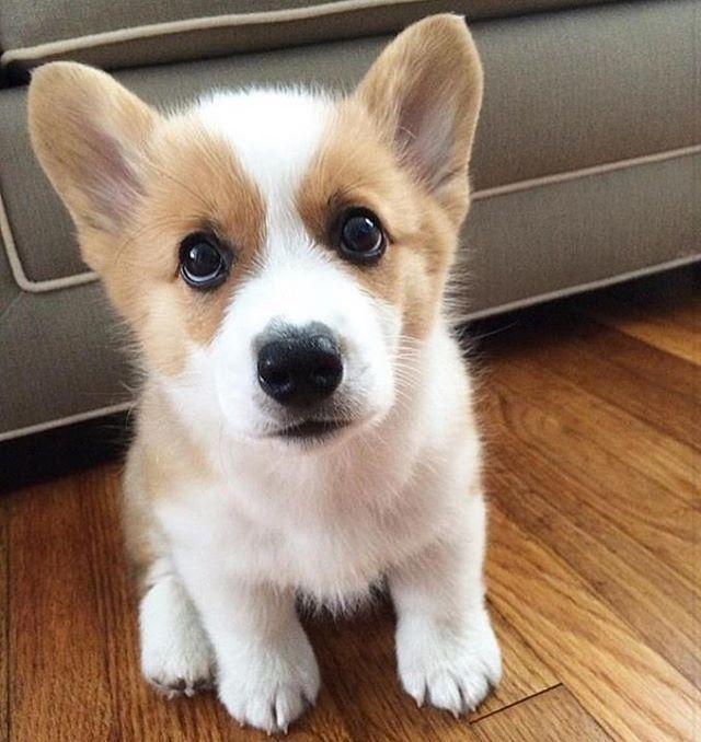 Pin Von Karin V Auf Hundekinder Zum Verlieben In 2020 Mit Bildern Susseste Haustiere Niedliche Tierbabys Niedliche Hunde